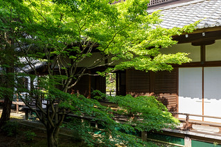 青蓮院門跡 / Shoren-in Temple