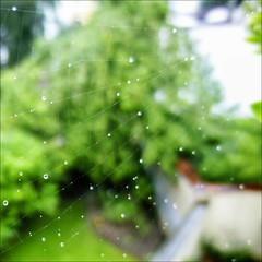 Des perles de pluie... (017/365)