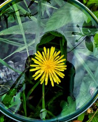 Close inspection (abhishekskumar) Tags: macro macrophotography nature geometry flower 100mm closeinspection look closeup planetearth lens focus