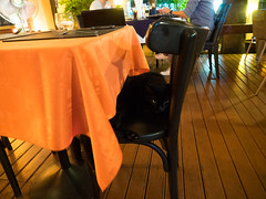 P7151046 (tatsuya.fukata) Tags: thailand samutprakan cabanagarden restaurant italian food aniaml cat
