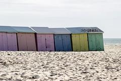 IMG_0424 (Azezjne (Az photos)) Tags: canon 75300 50 stm 600d berck sur mer bercksurmer cote côte dopale bromance plage sable bokeh zoom coucher soleil sunset beach sand eclipse dune mouette animaux animalière flou 75 300