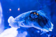 Strange fish (tesKing (Italy)) Tags: abudhabi dubai dubaimall emiratiarabi uae emiratiarabiuniti ae