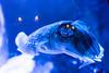 Strange fish (tesKing (Italy)) Tags: abudhabi dubai dubaimall emiratiarabi emiratiarabiuniti
