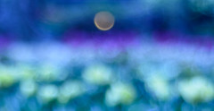 Dawn's Full-Moon Sunrise (EXPLORED) (Katrina Wright) Tags: dsc0739 bokeh colour moon dawn daybreak fullmoon abstract