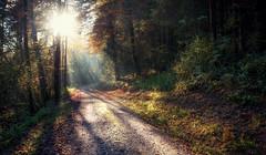 Forest Walk (brue') Tags: forest light sun ray licht wald woods hike path way green sonne grün baum trees tree weg