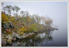 Lakeside (adam_pierz) Tags: lake trees woodland norway kvaloya autumn mist nikond600