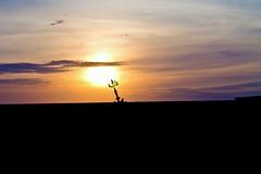 Tower of memory (Wal Wsg) Tags: towerofmemory torredelamemoria parquedelamemoria dia day sol sun atardecer atardece ocaso sunset sunlight argentina argentinabsas bsas buenosaires caba capitalfederal ciudadautonoma ciudaddebuenosaires canoneosrebelt3 paisaje