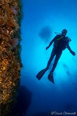 IMG_5973 (davide.clementelli) Tags: scuba underwater underwaterlife diving dive immersione portofino colori colors colore color fishes fish pesci