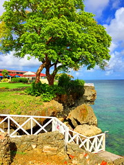 HFF! (peggyhr) Tags: peggyhr fence ocean trees hff crownpoint tobago thegalaxy thelooklevel1red