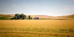 1L0A4022 (kayaker72) Tags: palouse washingtonstate easternwashington palouseregion wheat wheatfields