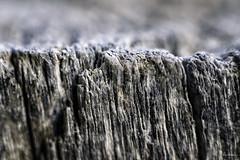 wood (ancoay) Tags: macro textura madera fusta bois wood macromondays 7dwf texture