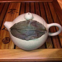 When you find a leaf that is almost as big as your teapot 😍 (teaformepleasenicole) Tags: tea