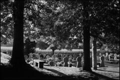 Old basque cemetery in Sare (Romain Massola) Tags: paysbasque paisvasco euskalherria euskadi cimetiere cemetery graveyard sare sara feuillage folliage lumiere light contrejour backlight arbre tree soleil sun leica m6 canon 50mm canon50mmf14ltm ilford hp5 bw nb blackandwhite noiretblanc bwfp epson v700 epsonv700 rodinal