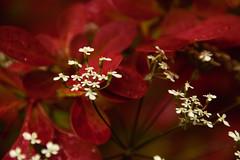 S.MasséMaisonduMajordome©TourismeHautLimousin-15 (tourisme_hautlimousin) Tags: jardin gîte vacances hautlimousin patrimoine location fleurs botanique tourolim