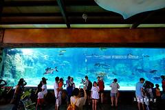 08 (樂活的大方) Tags: 20170724sb 新加坡動物園 river safari