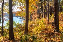 Lake Haigler 2016 23 (Jim Dollar) Tags: jimdollar lakehaigler annespringsclosegreenway fortmill southcarolina sc fall canon6d