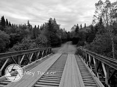 (AlleyTucker) Tags: blackwhite newfoundland northernpeninsula fall autumn bridge beautiful