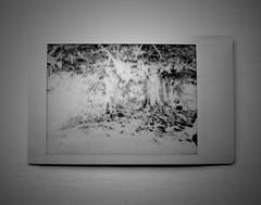 Trees at Avebury on Leica Sofort (a.pierre4840) Tags: leica sofort leicasofortmonochrom panasonic lumix gm1 mzuiko 25mm f18 bw blackandwhite monochrome noiretblanc trees tree avebury wiltshire england instantfilm
