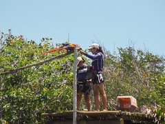 Parrots (Jerry Bowley) Tags: rivieramaya xelha ecopark parrots allinclusive staff