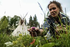 Salad (Way Out Crew) Tags: wildedibles edibles tipi nature tribe thrive outdoorlife lifeofadventure wayout primitive backtobasic wildernessliving adventurebabe salad gathering huntergatherer explore learn meditation discover friluftsliv äventyr avontuur saami journey wander wild lifestyle
