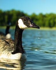 Patience, focus, timing. (syss3) Tags: naturephotography natureandnothingelse nature birdphotopgraphy bird birds nikkor nikonphotohgraphy nikon ocean sun sigma