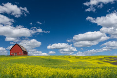 Red Barn (Harry2010) Tags: washington palouse canola yellow field barn red clouds bluesky