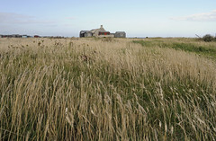 grasses (auroradawn61) Tags: portlandbill weymouthandportland dorset uk england july 2017 summer coast sea