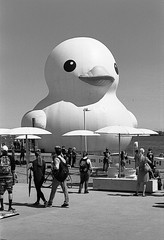Big Duck (AroundMyTown) Tags: duck toronto harbourfront canada150 blackandwhite film acros 100