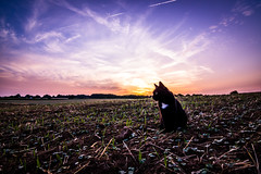 Cat (SylvainB_) Tags: sarthe france campagne ciel crépuscule nuage champ chat nature paysage cloud photography landscape twilight colors couleur cat