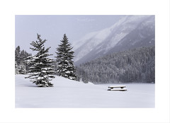 Saved A Seat For You .... (Maxwell Campbell) Tags: banff canada twojacklake snow trees landscape