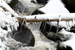Tridimensional water (Goruna) Tags: water snow stream winter icicles eiszapfen wasser schnee tridimensional wernigerode goruna