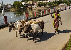 Tres burras y una mujer (Nebelkuss) Tags: fujixpro1 india rajasthan udaipur burro donkey puente bridge lago lake fujinonxf18f2