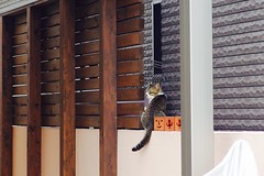 Today's Cat@2017-07-12 (masatsu) Tags: cat thebiggestgroupwithonlycats catspotting pentax mx1