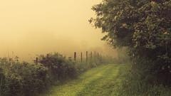 Destination (Netsrak) Tags: baum bäume eu europa europe landschaft natur nebel wald fog landscape mist nature tree trees woods rheinbach nordrheinwestfalen deutschland de