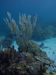 Abaco-7087541 (smithjustind) Tags: abaco bahamas diving sailing scuba snorkeling