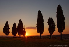 Toscany Sunset Dream (Johan Konz) Tags: sunset blue sky green field tree cypress stradaprovincialedichianciano valdorcia sanquiricodorcia tuscany italy landscape outdoor rural silhouette nikon d90