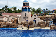 Sea World San Diego-45 (N i c o_) Tags: nlopedebarrios ca d90 eeuu estadosunidosdeamérica nikon nikond90 sandiego usa unitedstatesofamerica california travel turismo vacaciones vacation viaje estadosunidosdeamerica seaworld sea world park