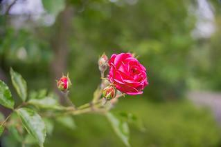 Pink & proud...