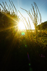 setting sun (enteryourscreenname) Tags: sunsetting sun setting sky fields farm flare f16