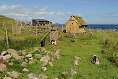 Tórshavn, Faroe Islands (chimck) Tags: tórshavn faroeislands denmark