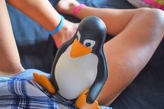 Lovely conversation (BarbaraBonanno BNNRRB) Tags: tux mascotoflinux mascot linux lovelyconversation