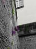 Flower on the wall (lens73germany) Tags: 365 365tage 365days project365 3652015 365daysproject fotodestages photooftheday 366 366tage 366days project366 3662015 366daysproject farbe bunt color colorkey olympus omd em5 mft landscape landschaft outdoor natur blume flower flores pflanze plant deutschland germany allemagne dresden sachsen saxony sächsische schweiz bastei felsen rocks mountain berge wall wand bw festungkönigstein schloss castle festung königstein
