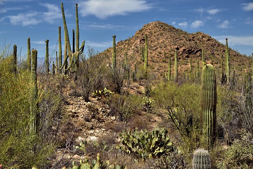 Hills, Blues Skies and Clouds for a Backdrop of Saguaro Cactus (Saguaro National Park)