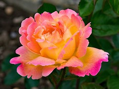 https://t.co/0vIQd2r6Mi (thed4rkestrose) Tags: marcsi51 likes d4rk r0se d4rk3str0se d4rk3st d4rkr0se beauty beaut