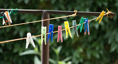Colorful forceps (Adrienn723) Tags: nature naturaleza outside outdoor animals animales animal floraandfauna flor flower flora colorful colors forceps garden clothes verde green yellow amarillo rose azul blue