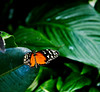 Hampton Court Flower Show 2017 (Simon Caunt) Tags: hampton court hamptoncourt flowershow 2017 london londonseason butterflies butterfly nikond800 nikoncameras afsnikkor2470mmf28 240700mmf28nikkor d800