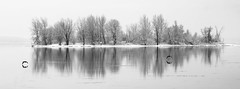 Island in early spring (Karma2c) Tags: island water geese spring snow lake trees