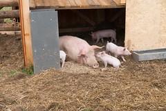 GoUrban_170727_Farm_121