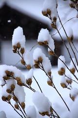 05-IMG_0780 (JShira) Tags: fukushima 福島 aizu 会津 ouchijuku 大内宿 冬 winter 雪 snow japan