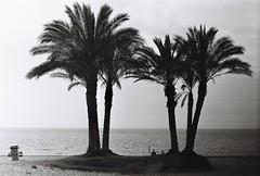 Palmtrees of La Herradura. Analog, No edit. A tribute to Luigi Ghirri (backmango) Tags: minimal art horizon luigighirri photooftheday picoftheday bestoftheday trees bw photo flickr best beach ocean laherradura spain palmtrees bnw blackandwhite